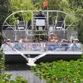 Everglades Cruise in Miami